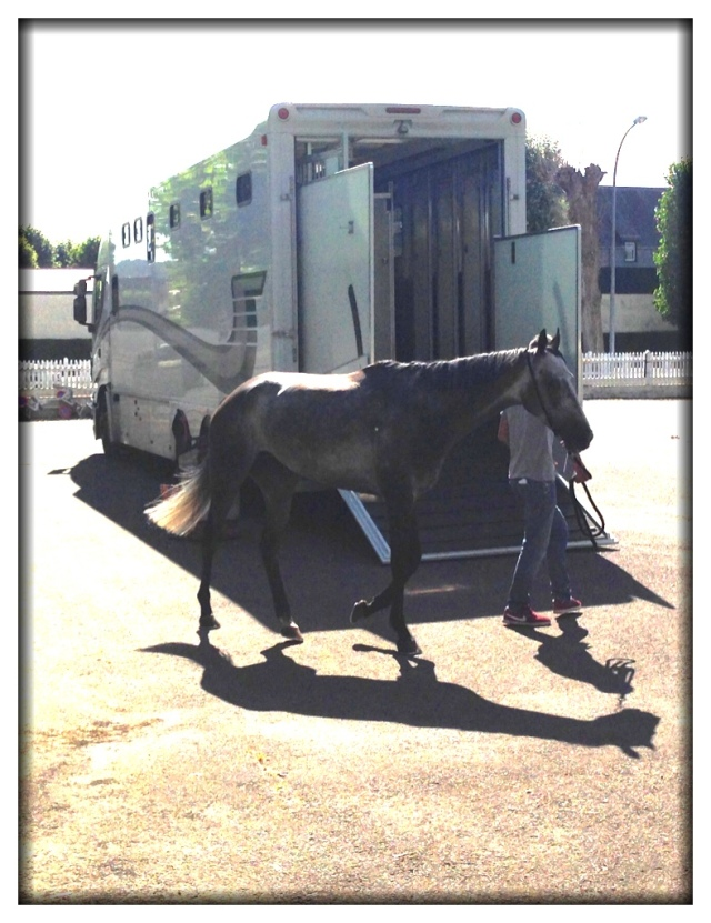 But we did get to see several horses loaded into this van.